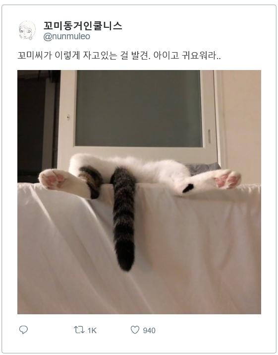 고양이 자는 자세..jpg