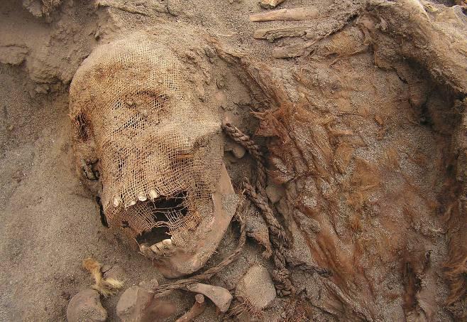 남미 페루에서 발견된 미라. 550년 전 엘니뇨 때 발생한 폭우와 홍수 피해를 막기 위해 신에게 인신공양을 한 흔적으로 추정된다..jpg