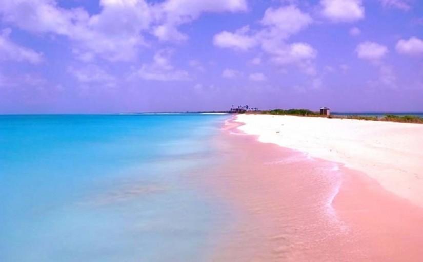 핑크 모래 해변, 바하마2.jpg
