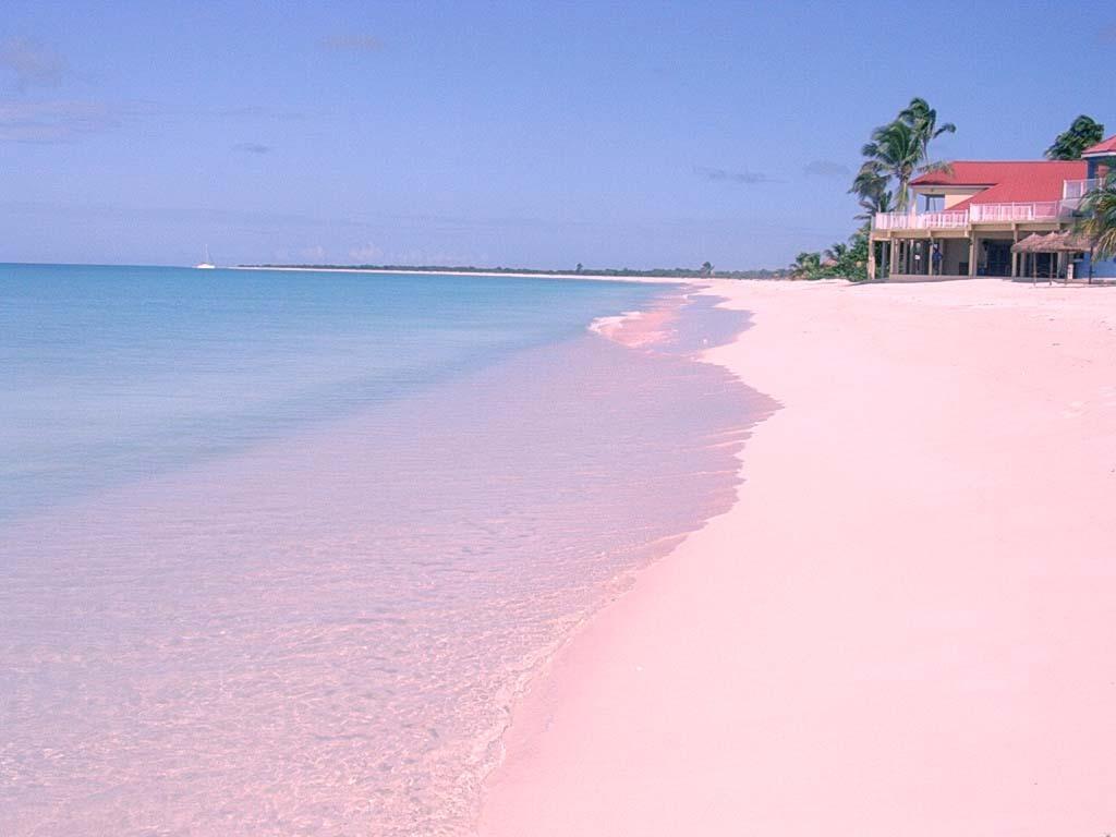 핑크 모래 해변, 바하마3.jpg