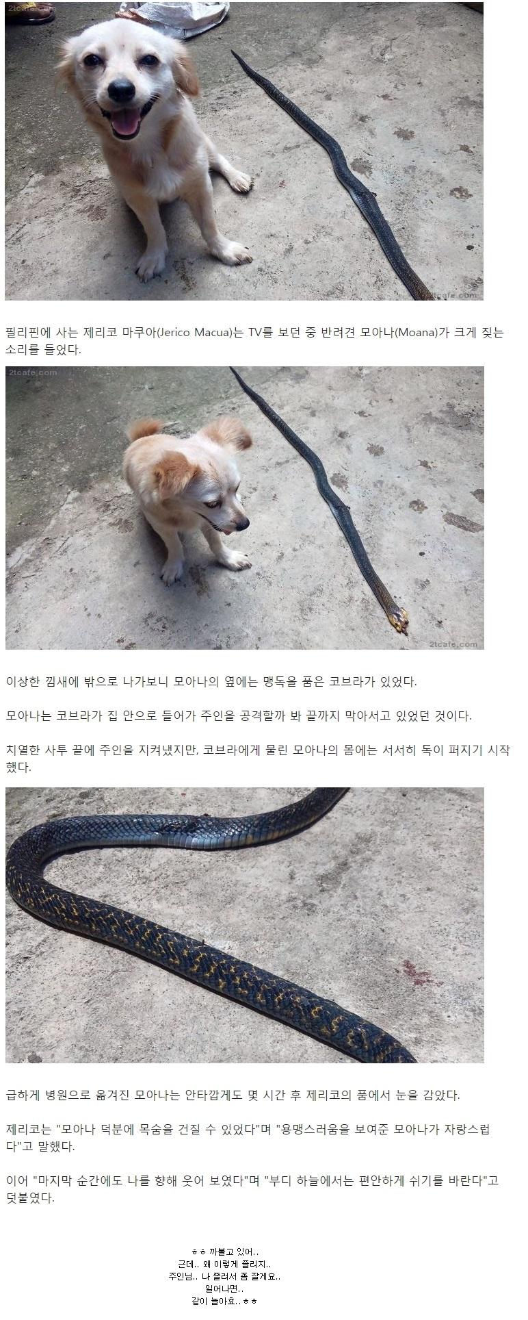 독사잡고 해맑은 강아지.jpg