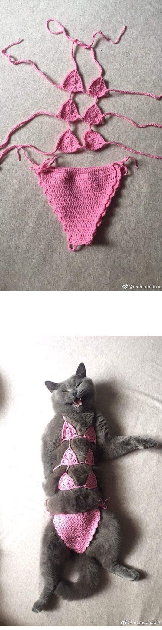 고양이 소녀 비키니.jpg
