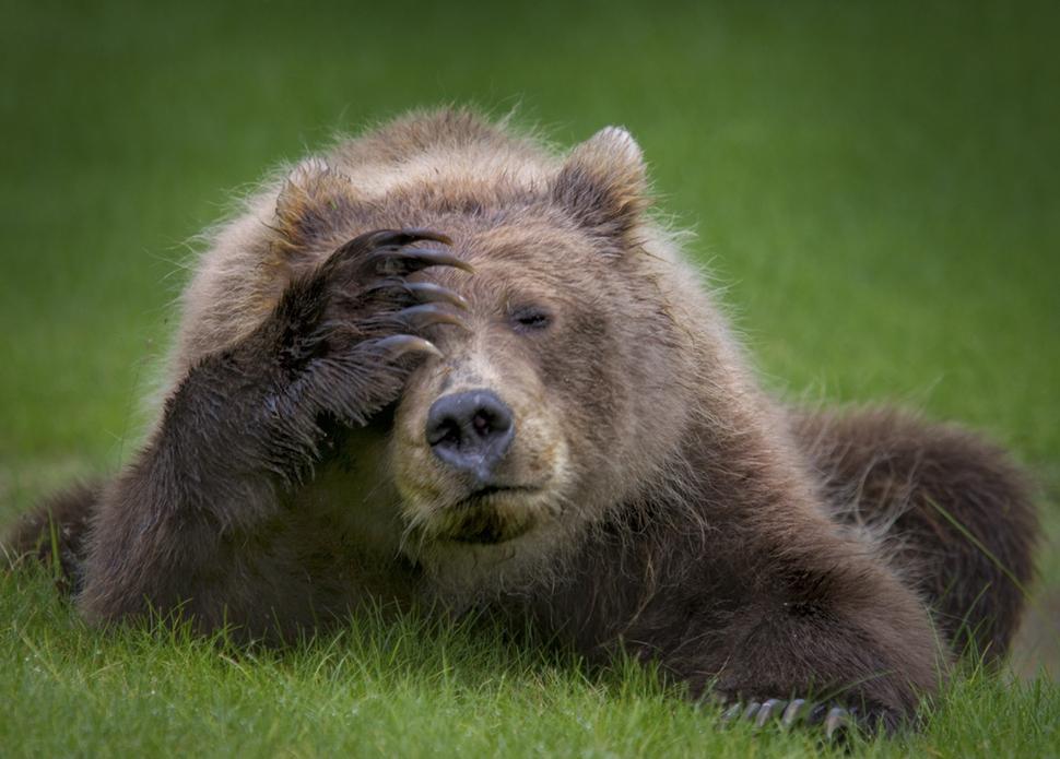 웃긴 야생동물 사진 대회1.jpg