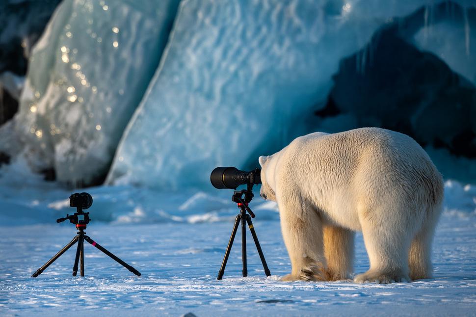 웃긴 야생동물 사진 대회9.jpg