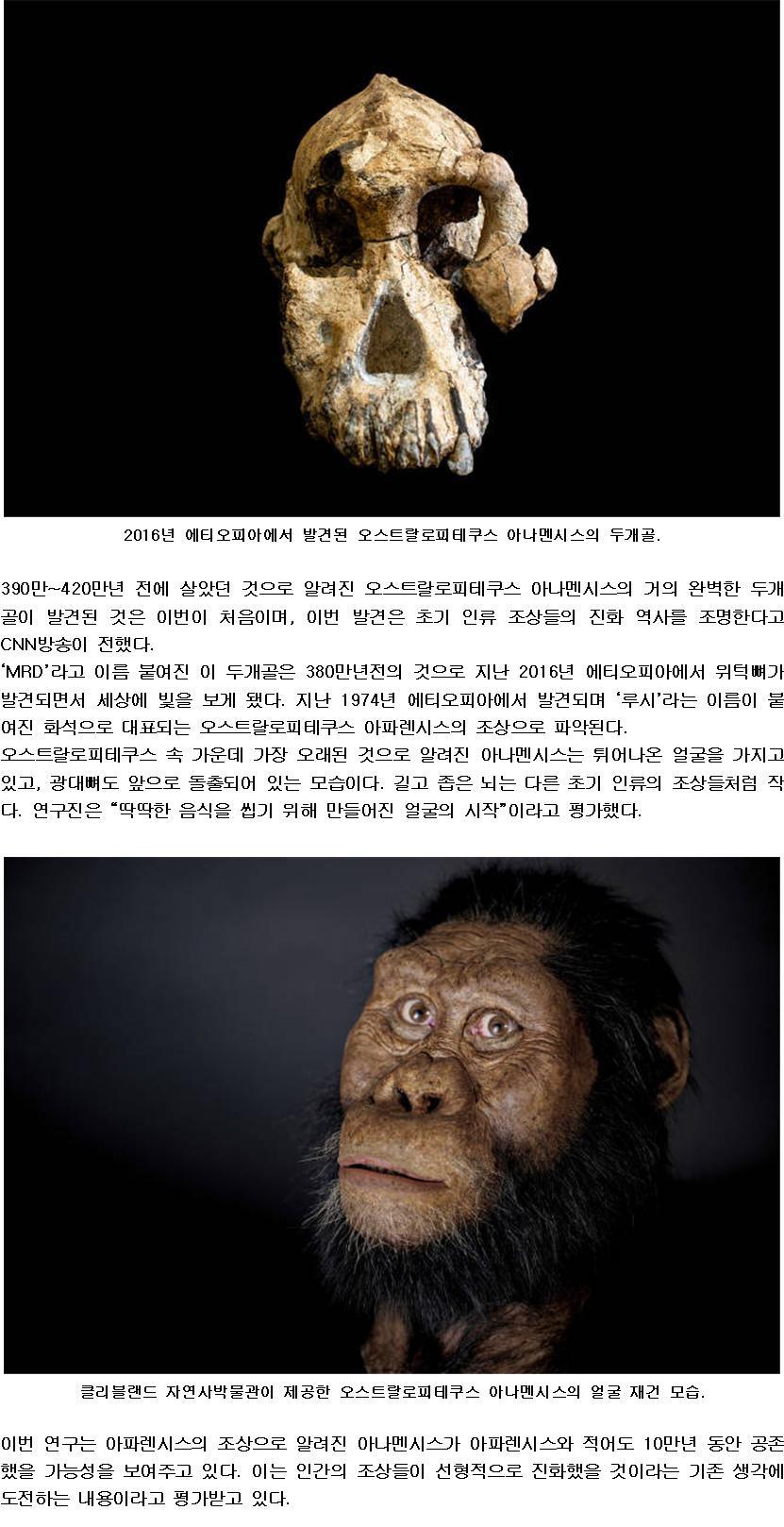 380만년전 인류 조상의 얼굴.jpg