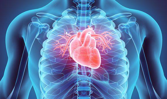 심장의 위치..jpg