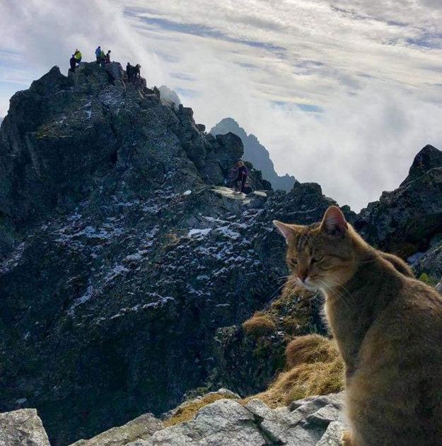 2500m 산 정상서 발견된 미스터