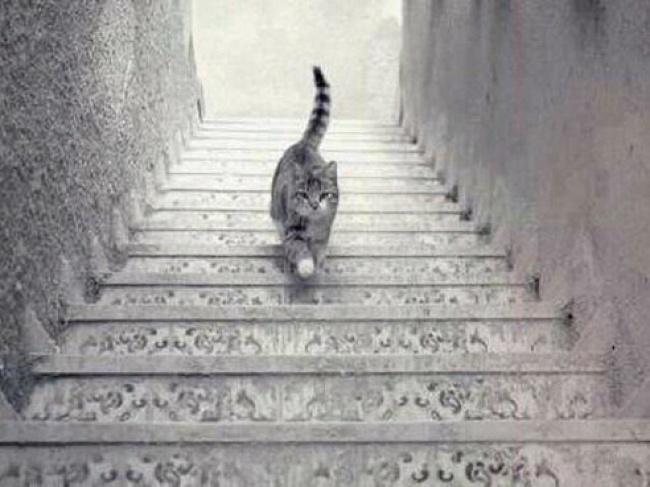 고양이는....jpg