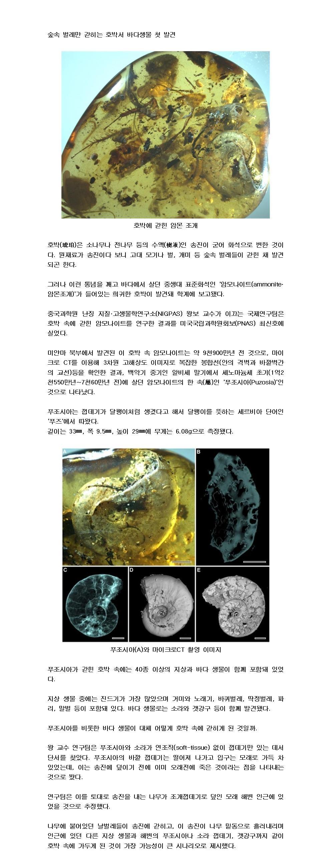 9천900만년 전 암몬 조개가 송진에 갇힌 까닭.jpg