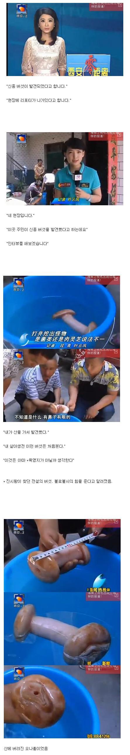중국의 신종 버섯.jpg