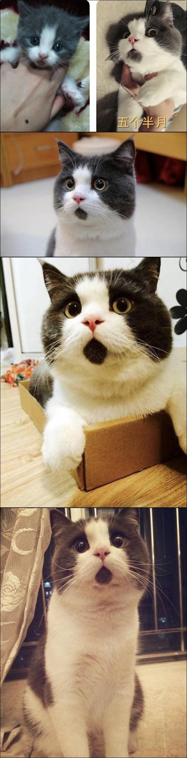 놀라는 고양이.jpg